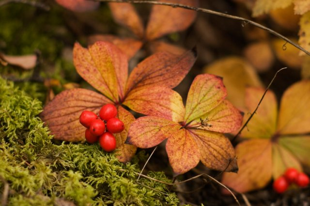 Woodlands  A Woodsy Recipe Complete With Forest Berries.